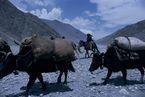 ネパール・ムスタンno.0053