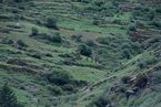 ネパール・ドルパno.0011