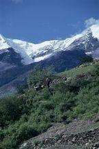 ネパール・ドルパno.0023