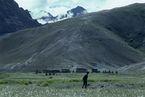 ネパール・ドルパno.0041