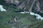 ネパール・ドルパno.0043
