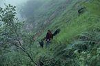 ネパール・ドルパno.0055