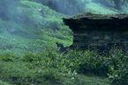 ネパール・ドルパno.0071