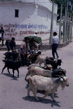 ネパール・カトマンドュウno.0071